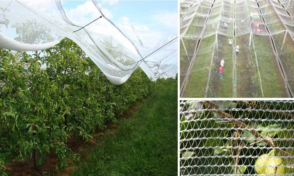 The Importance of Using Anti Hail Net