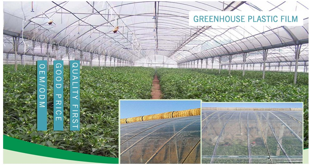Greenhouse Film.jpg