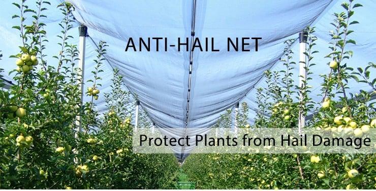Anti-Hail-Net.jpg
